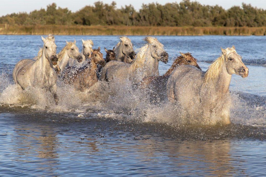קמארג' אזור מדהים לטיול טבע בפרובנס